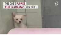 Dogs, Puppies, and Taken: THIS DOG S PUPPIES  WERE TAKEN AWAY FROM HER THIS MAKES ME SO HAPPY
