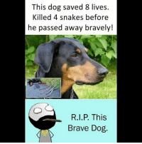 Be Like, Meme, and Memes: This dog saved 8 lives.  Killed 4 snakes before  he passed away bravely!  R.I.P. This  Brave Dog Twitter: BLB247 Snapchat : BELIKEBRO.COM belikebro sarcasm meme Follow @be.like.bro
