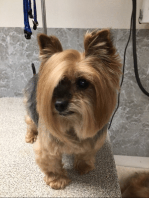 Petsmart, Dog, and Speak: This dog showed up to PetSmart and asked to speak to the manager