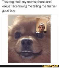 Dogs, Funny, and Moms: This dog stole my moms phone and  keeps face timing me telling me l'mhis  good boy  funny What is this 😂😂😂😂😂