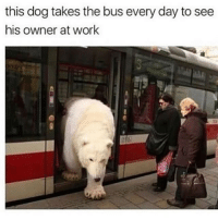 bleeeeehhhhhhhh it's real cold and windy here and it fuckin sUcks.: this dog takes the bus every day to see  his owner at work bleeeeehhhhhhhh it's real cold and windy here and it fuckin sUcks.