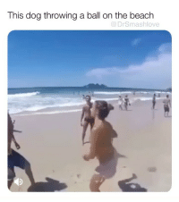 "80s, Ariana Grande, and Bad: This dog throwing a ball on the beach  @DrSmashlove A dear friend of mine who live in NYC was seriously dating a man from out of town. He planned to move to NYC and they planned to start a life together. He ended up calling it all off and it hurt her badly. I was texting with her and she said out of deep frustration ""I HONESTLY JUST WANNA B LIKE ARIANA GRANDE THANK U NEXT BUT NOOO"". This really hurt my heart. Lemme splain y'all some. First, even Ariana ain't like Ariana. I don't know what Ariana was like as a child or what she like now. None of us do. Everything about her - from her music to her social media - is carefully crafted-curated by a team of dozens of people who make their living off of her. She has the fourth largest IG account with 136M followers. She don't just walk into a bathroom bust a selfie and post it like y'all. She got a team of former Facebook-IG employees who analyze IG activity to the millisecond and post content that will guarantee growth and exposure of her account. And her music is cranked out by the same old balding men in creepy black nike caps, bad tans and tight jeans who managed Guns N Roses-Metallica in the 80s and now have decided that dressing a grown woman up as a lil girl with bows in her hair is the wave. Don't ever get lost in the sauce. NOBODY's heart is built like that. NOBODY invest they entire existence someone and then by the next day they like ""thank u next"". That's a tag line only someone with a sick heart (in a black nike baseball cap 😂) could devise. It's not real. Love is a gift. Sometimes the world gets in the way. Don't stop loving with all your heart. My friend said ""What if I never meet anyone who makes me feel like that? Or worse, what if I can't let myself feel like that with someone who deserves it bc he fvcked up my sense of trust so bad?"" Well bish that's how the heart works lol! That's how u feel when u in love and it get torn apart! U feel like maybe u never gon be in love again! Nah. A merciful God ain't build us like that and God is indeed merciful. Give it time. U will love again and realize that ya ex was a whole trash can. It take time to heal but it will happen. Don't hold yourself to someone else's timeline! Ever! Love y'all. Bless up ❤️"