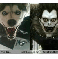 Memes, 🤖, and Dog: This dog  TotallyLooksLike.com  Ryuk from Deat Ryuk . . . . . . . . .