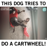Good, Humans of Tumblr, and Boy: THIS DOG TRIES TO  JACQUELINE  SLOAN ZIEGLER  DO A CARTWHEEL! What a good boy!