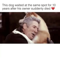 Indonesian (Language), Dog, and 10 Years: This dog waited at the same spot for 10  years after his owner suddenly died Kisah Hachiko