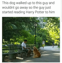 I'm the Dog: This dog walked up to this guy and  wouldnt go away so the guy just  started reading Harry Potter to him I'm the Dog