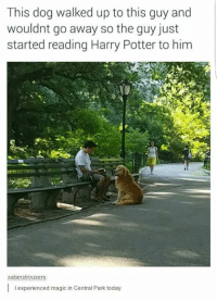 Dog Walk: This dog walked up to this guy and  wouldnt go away so the guy just  started reading Harry Potter to him  satanstrousers  l experienced magic in Central Park today