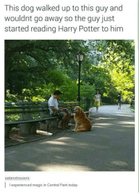 "<p>Your a Wizard Doggo via /r/wholesomememes <a href=""http://ift.tt/2nrvH8F"">http://ift.tt/2nrvH8F</a></p>: This dog walked up to this guy and  wouldnt go away so the guy just  started reading Harry Potter to him  satanstrousers  I experienced magic in Central Park today <p>Your a Wizard Doggo via /r/wholesomememes <a href=""http://ift.tt/2nrvH8F"">http://ift.tt/2nrvH8F</a></p>"