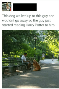 Harry Potter, Hope, and Potter: This dog walked up to this guy and  wouldnt go away so the guy just  started reading Harry Potter to him I hope the dog is enjoying it