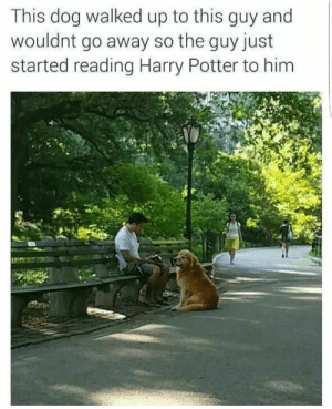 Whos a gud boi?: This dog walked up to this guy and  wouldnt go away so the guy just  started reading Harry Potter to him Whos a gud boi?