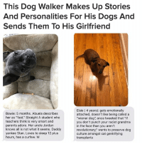 """Dogs, Grandma, and Parents: This Dog Walker Makes Up Stories  And Personalities For His Dogs And  Sends Them To His Girlfriend  Bowie: 5 months. Abuela describes  her as """"fast."""" Straight A student who  teachers think is very smart and  parents adore. Her uncle Jordan  knows all is not what it seems. Daddy  yankee Stan. Loves to sleep 12 plus  hours, has a curfew. W  Elsie (4 years): gets emotionally  attached, doesn't like being called a  """"wiener dog"""", once tweeted that """"if  you don't punch your racist grandma  in the face than you aren't  revolutionary,"""" wants to preserve dog  culture amongst cat gentrifying  transplants From @BuzzFeedNews 👈😭😂🐶"""