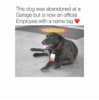 Memes, 🤖, and Dog: This dog was abandoned at a  Garage but is now an official  Employee with a name tag He gets 24-7 attention from the garage staff and customers 🐶