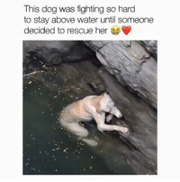 Memes, Water, and 🤖: This dog was fighting so hard  to stay above water until someone  decided to rescue her