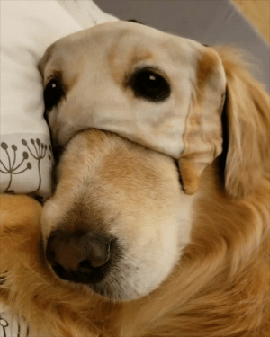 Sleeping, Mask, and Dog: This dog wearing a sleeping mask is ready for bed! 😍😴
