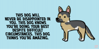 "Disappointed, Target, and Tumblr: THIS DOG WILL  NEVER BE DISAPPOINTED IN  YOU. THIS DOG KNOWS  YOU'RE DOING YOUR BEST  DESPITE DIFFICULT  CIRCUMSTANCES. THIS DOG  THINKS YOU'RE AMAZING. positivedoodles:[Drawing of a german shepherd next to a caption that says ""This dog will never be disappointed in you. This dog knows you're doing your best despite difficult circumstances. This dog thinks you're amazing."" on a blue background.]"