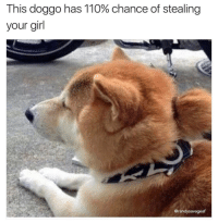 When you have maximum bork drive at 7 but have to steal yo girl at 8 Follow: @randysavageaf shiba shibainu pupper bork doggo doge dogs dogsofinsta: This doggo has 110% chance of stealing  your girl  @randysavageaf When you have maximum bork drive at 7 but have to steal yo girl at 8 Follow: @randysavageaf shiba shibainu pupper bork doggo doge dogs dogsofinsta