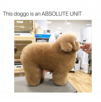 Legendary pupper: This doggo is an ABSOLUTE UNIT Legendary pupper