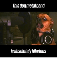 These doggos sure know how to rock 🤘😂: This dogmetalband  lsabsolutely hilarious These doggos sure know how to rock 🤘😂