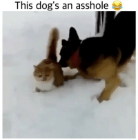 Dog: because fuck you that's why Backup: @bitchpride: This dog's an asshole Dog: because fuck you that's why Backup: @bitchpride