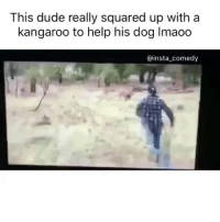 Funny, Memes, and Square Up: This dude really squared up with a  kangaroo to help his dog lmaoo  @insta comedy lmaooo he a goat in my eyes 🐐. I would have done the same thing fuck that nigga kangaroo jack