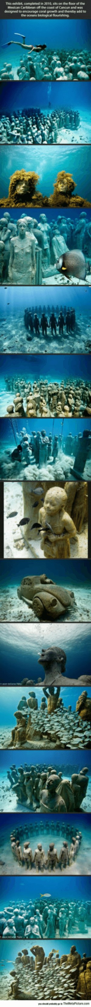 Tumblr, Blog, and Http: This exhibt, completed in 2010, sits on the oor of the  the oceans biological flourishing srsfunny:Awesome Underwater Museum