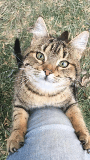 Cute, Cat, and This: This extremely cute cat