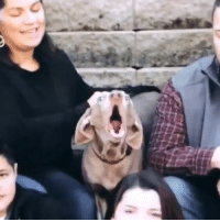 This family brought their dog to a photoshoot and the results are priceless! 😂😂  Credit: By Mari Photography: This family brought their dog to a photoshoot and the results are priceless! 😂😂  Credit: By Mari Photography
