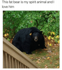I wanna give him a big hug (@dogsbeingbasic): This fat bear is my spirit animal and l  love him I wanna give him a big hug (@dogsbeingbasic)