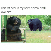 I want to give him a big hug (@_kevinboner ): This fat bear is my spirit animal and  love him I want to give him a big hug (@_kevinboner )