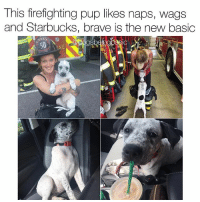 I hope this baby will rescue me one day. (Lights piece of paper on fire and calls 911) Dog mom @mia_kulasic: This firefighting pup likes naps, wags  and Starbucks, brave is the new basic I hope this baby will rescue me one day. (Lights piece of paper on fire and calls 911) Dog mom @mia_kulasic