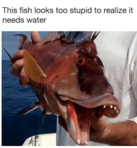 Funny, Thirsty, and Fish: This fish looks too stupid to realize it  needs water I am so Thirsty