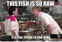 Memes, Nemo, and Raw: THIS FISHIS SO RAW  ITS STILL TRYING TO FIND NEMO Gordon Ramsey Memes