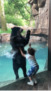Memes, Saw, and Bear: This five-year-old boy was excited when he saw Luka the Andean bear leaning against the window. When he started jumping on his side of the window, Luka happily copied him and jumped on his side while splashing the water he was in