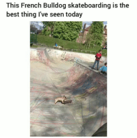 Facts, Funny, and Best: This French Bulldog skateboarding is the  best thing I've seen today Facts 😂💀