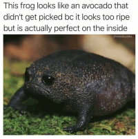 Hump Day, Memes, and Avocado: This frog looks like an avocado that  didn't get picked bc it looks too ripe  but is actually perfect on the inside  @moistbuddha 23 Mesmerizing Memes For Your Hump Day Pleasure #AnimalMemes #SadToad #Avocado #RandomMemes #FunnyMemes