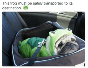 Frog, This, and Its: This frog must be safely transported to its  destination.