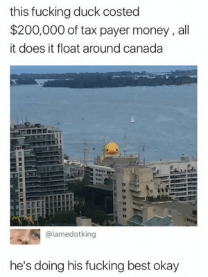 Bailey Jay, Fucking, and Money: this fucking duck costed  $200,000 of tax payer money, all  it does it float around canada  @lamedotking  he's doing his fucking best okay lolwtfmemes:    He's doing his best
