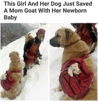 Memes, 🤖, and Goats: This Girl And Her Dog Just Saved  A Mom Goat With Her Newborn  Baby Faith in humanity restored. (@aranjevi)