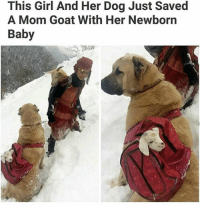 the baby goat's face I'm wheezing I love goats -F: This Girl And Her Dog Just Saved  A Mom Goat With Her Newborn  Baby the baby goat's face I'm wheezing I love goats -F