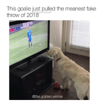 Fake, Memes, and Watch: This goalie just pulled the meanest fake  throw of 2018  oasbeingbasic  occEr  13  NY1  @the.golden.winnie PSA *Sarah McLachlan sings* During the World Pup, please don't allow your dog to watch TV. Can induce Fake Throw Trauma or jealousy amongst breeds. Pup @the.golden.winnie