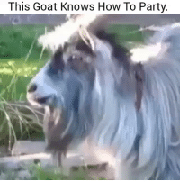 Bruh whose goat is this 😂💀 👉Tag a friend 👉Follow (@soflo) for more laughs: This Goat Knows How To Party. Bruh whose goat is this 😂💀 👉Tag a friend 👉Follow (@soflo) for more laughs