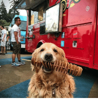 9gag, Memes, and Good: This good boi can help you hold many things with his mouth 📸 @dash.dog - goldenretriever dog goodboi 9gag