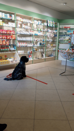 This good boi waiting in line at the pharmacy: This good boi waiting in line at the pharmacy
