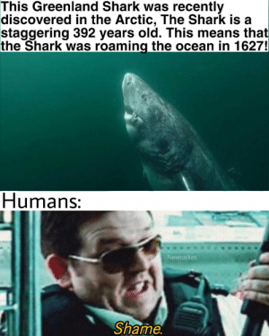 Shark, Ocean, and Old: This Greenland Shark was recently  discovered in the Arctic, The Shark is  staggering 392 years old. This means that  the Shark was roaming the ocean in 1627!  Humans:  Newtockos  Shame. Shame.