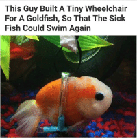 my drivers ed teacher gave me my grading sheet back so I could see my grade but I had to leave early so I left with it and then my friend called me saying the teacher wanted it back and I'm like OH MY GOD WHY DIDNT HE SAY ANYTHING HE KNEW I WAS LEAVING: This Guy Built A Tiny Wheelchair  For A Goldfish, So That The Sick  Fish Could Swim Again my drivers ed teacher gave me my grading sheet back so I could see my grade but I had to leave early so I left with it and then my friend called me saying the teacher wanted it back and I'm like OH MY GOD WHY DIDNT HE SAY ANYTHING HE KNEW I WAS LEAVING