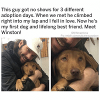 "Best Friend, Bless Up, and Cars: This guy got no shows for 3 different  adoption days. When we met he climbed  right into my lap and I fell in love. Now he's  my first dog and lifelong best friend. Meet  Winston!  @DrSmashlove  Pic: reddit u/peanutbutterspacejam Just watched Black Panther this past wknd. As much as I loved it, I'm still salty that they had the warlord at the beginning saying ""WALLAHI I'LL SHOOT YOU"". Bruv. BRUV 😂. THE LESSON LEARNED FROM HOLLYWOOD IS THAT EVEN IN A FICTIONAL PARALLEL AFRICAN UNIVERSE WHERE AN IMAGINARY ELEMENT NAMED 'VIBRANIUM' POWERS CARS, TRAINS AND UNTHINKABLE TECHNOLOGY ADVANCEMENT...THEY STILL GOT US SHOOTING SH!T, KIDNAPPING WOMEN AND CAUSING TROUBLE LMAO BLESS UP 😂😂😂"