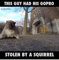 Dank, GoPro, and Squirrel: THIS GUY HAD HIS GOPRO  newsflare  STOLEN BY A SQUIRREL This cheeky squirrel managed to steal a GoPro 😂😂😂