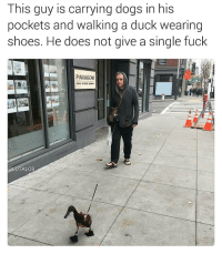 This is the white version of Dr. Dolittle: This guy is carrying dogs in his  pockets and walking a duck wearing  Shoes. He does not give a Single fuck  PARAGON  @LUTALO8 This is the white version of Dr. Dolittle