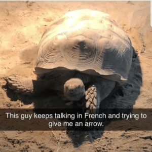 German Soldier Killed by French Sniper for Peeking Out of