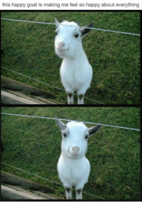 Forgot about this page put to make up for it here is happy goat: this happy goat is making me feel so happy about everything Forgot about this page put to make up for it here is happy goat